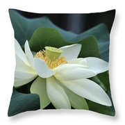 water lily 34 Yellow Lotus I Throw Pillow