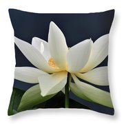Water Lily 36 Throw Pillow