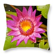 Water Lily After Rain 4 Throw Pillow