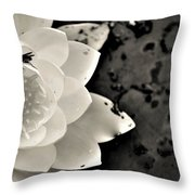 Water Lily And Fly Throw Pillow