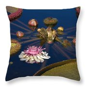 Water Lily And Platters Throw Pillow