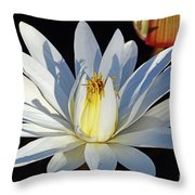 Water Lily At Dusk Throw Pillow