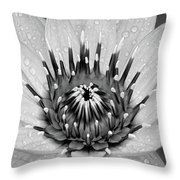 Water Lily B/w Throw Pillow