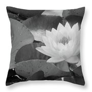 Water Lily - Burnin' Love 13 - Bw Throw Pillow