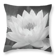 Water Lily - Burnin' Love 16 - Bw - Water Paper Throw Pillow
