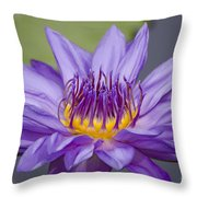 Water Lily Director George T Moore Throw Pillow