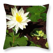 Water Lily From Private Garden Throw Pillow