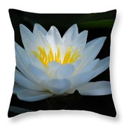 Water Lily Glow Throw Pillow