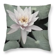 Water Lily In Soft Pink Throw Pillow