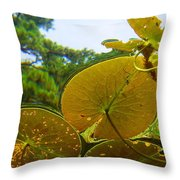 Water Lily Sky Throw Pillow