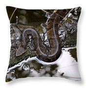 Water Moccasin Throw Pillow