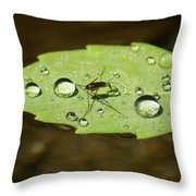 Water Strider Has A Drink At The Floating Leaf Cafe Throw Pillow