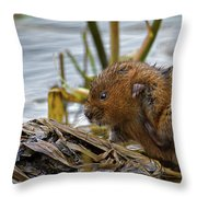 Water Vole Cleaning Throw Pillow