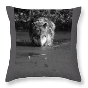 Water Wolf I Throw Pillow