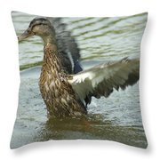 Watercovered Wingflapper Throw Pillow