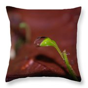 Waterdrop On A Litte Green Sprout  Throw Pillow