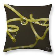 Waterdrops Catch By Grapevines Throw Pillow