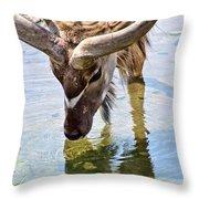 Watering Kudu Throw Pillow