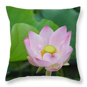 Waterlily Blossom With Seed Pod Throw Pillow