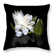 Waterlily  Reflection Throw Pillow