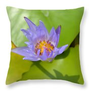 Waterlily Shadow Of Perfection Throw Pillow