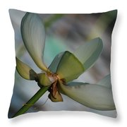 Waterlily Wash  Peekaboo Throw Pillow