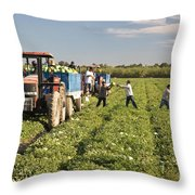 Watermelon Harvest Throw Pillow