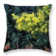 Wattyl - Wild Flower Of Australia Throw Pillow