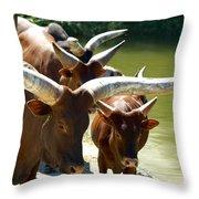 Watusi Cattle Throw Pillow
