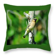 Wax Wing In A Small Branch  Throw Pillow