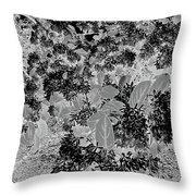 Waxleaf Privet Blooms On A Sunny Day In Black And White - Color Invert Throw Pillow