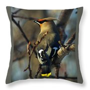 Waxwing On Guard Throw Pillow