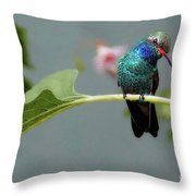 We Are Here Today And Gone Tommorrow Throw Pillow