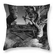 Weather Beaten Pine Tree And Ocean Bay - Monochrome Throw Pillow