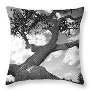 Weather Beaten Pine Tree And Sun - Monochrome Throw Pillow