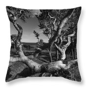 Weather Beaten Pine Tree At The Coast - Monochrome Throw Pillow