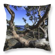 Weather Beaten Pine Tree At The Swedish High Coast Throw Pillow