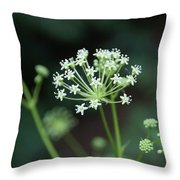 Web Design Throw Pillow