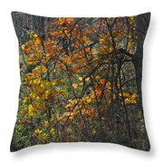 Web Of Color Throw Pillow