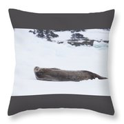 Weddell Seal On Ice Throw Pillow