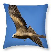 Wedgetail Eagle Flight Throw Pillow
