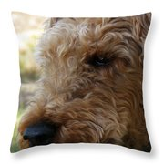 Welsh Lancelet Throw Pillow