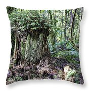 We're Not In Colorado Anymore Toto Throw Pillow