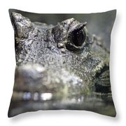 West African Dwarf Crocodile - Captive 03 Throw Pillow