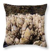 West Coast Barnacles Throw Pillow