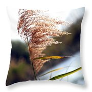 West Wind Today Throw Pillow