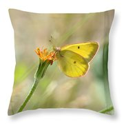 Wester Sulfur Butterfly Throw Pillow
