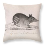 Western Barred Bandicoot. Perameles Bougainville Throw Pillow