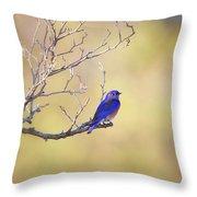 Western Bluebird On Bare Branch Throw Pillow