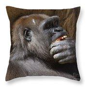 Western Gorilla, Gladys Porter Zoo, Brownsville, Texas Throw Pillow
